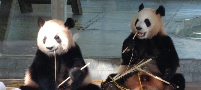 【世界の動物園】広州動物園