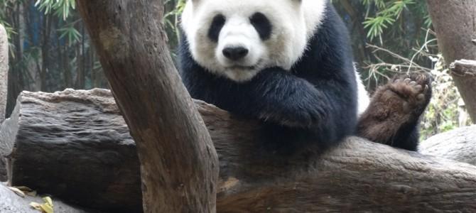 【世界の動物園】アジアNo4の動物園 長隆香江野生動物世界その2
