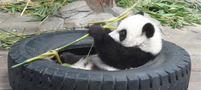 【世界の動物園】アジアNo4の動物園 長隆香江野生動物世界その3
