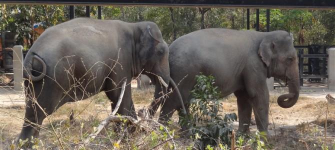 【世界の動物園】プノンペンのタマウ動物園は自然動物園だった