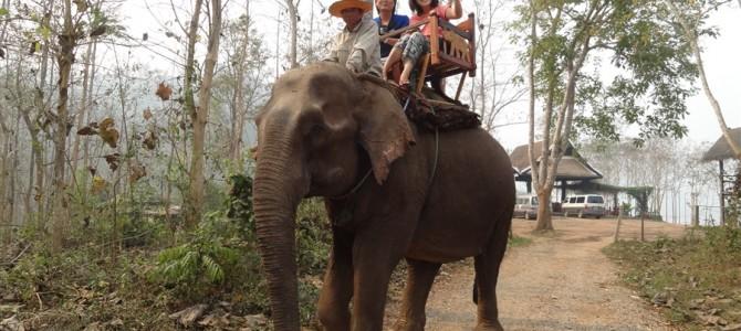 マホートと呼ばれる象使いの資格を取りました