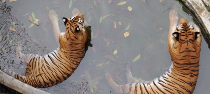 【世界の動物園】ジョホールバル動物園は市民に人気の動物園