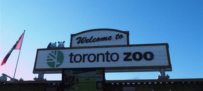 【世界の動物園】久しぶり!ジャイアントパンダを見に冬のトロント動物園へ