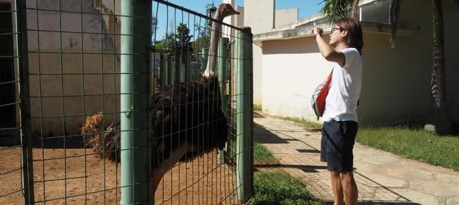 【キューバ3日目-1】【世界の動物園】11円のシエゴデアビラ動物園とは