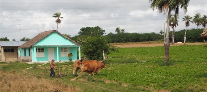 【キューバ14日目】ハバナから西の世界遺産、ビニャーレスの谷へ!とキューバの物価が釣り合ってない答え(仮)
