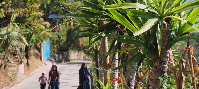 対岸の町、サンマルコス・ラ・ラグーナに行ってみたけど・・・