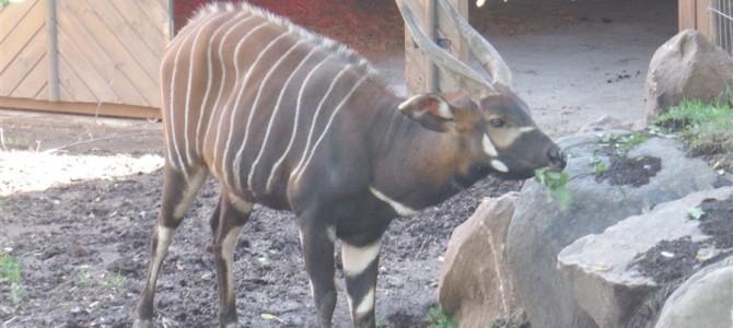【世界の動物園】丘に広がるサンティアゴ動物園