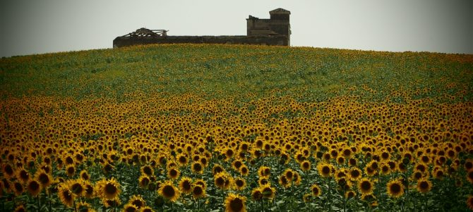 【スペイン&ポルトガル車旅Day11-1】スペインに再上陸。まさかの自然の絶景「ひまわり畑」に感激