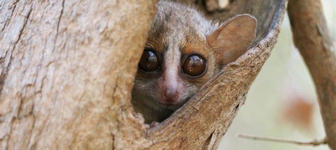 マダガスカルの神秘「バオバブの木」ツアー【第2弾】