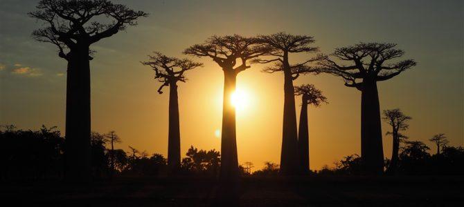 マダガスカルの神秘「バオバブの木」ツアー【第3弾】