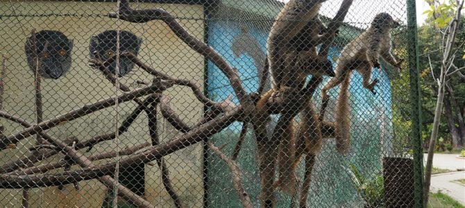 【世界の動物園】ワオ!キツネザルがいっぱい。キツネザルと触れ合えた、アンタナナリボ動物園【その1】