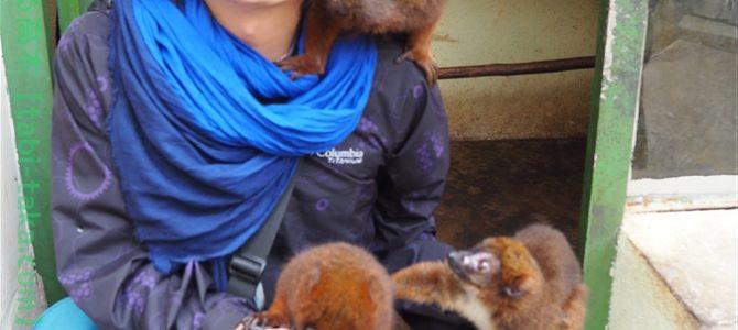 【世界の動物園】ワオ!キツネザルがいっぱい。キツネザルと触れ合えた、アンタナナリボ動物園【その2】