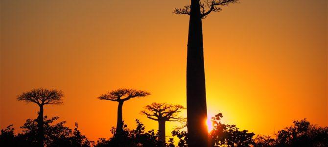 マダガスカルの神秘「バオバブの木」ツアー【第1弾】